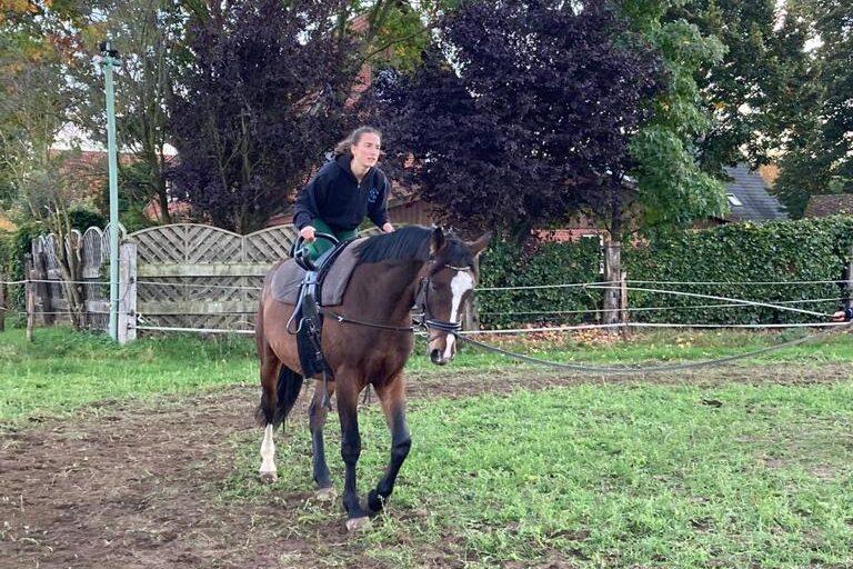 Ausbildung Voltipferd, Lister Ponyschule