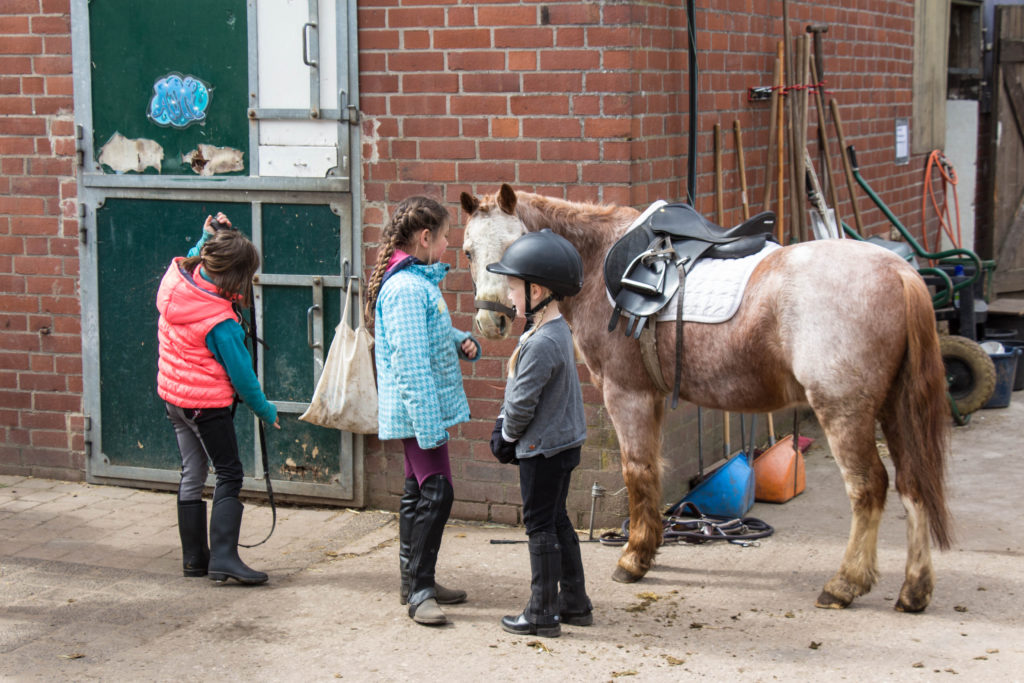Gruppenunterricht Dressur Lister Ponyschule