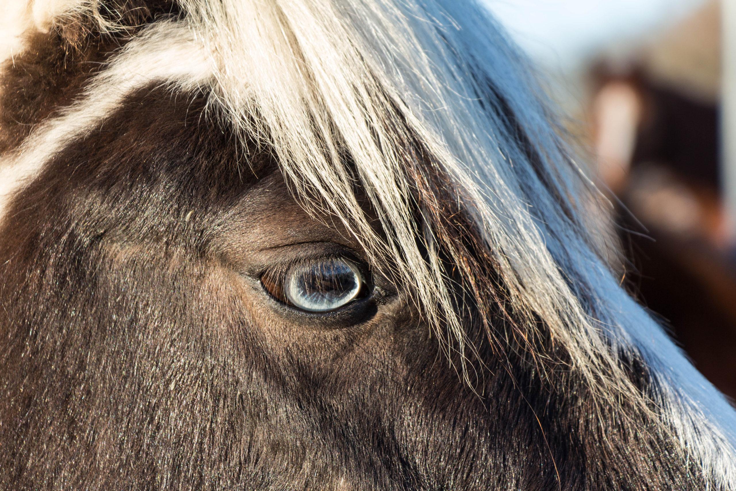 Frieda, Lister Ponyschule