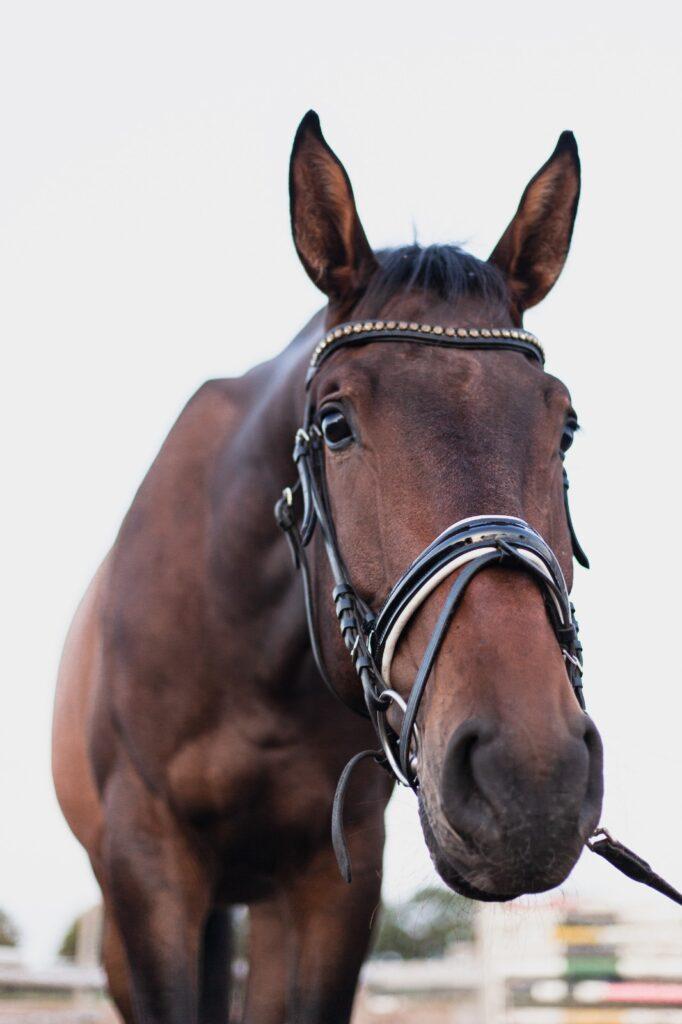 Sid, Lister Ponyschule