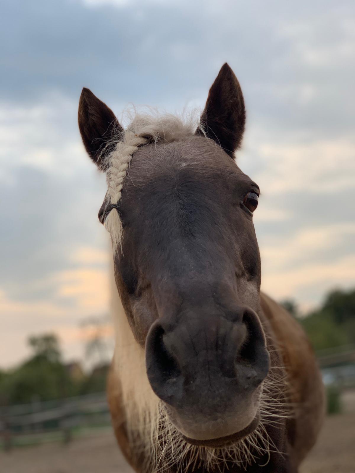 Feechen, Lister Ponyschule