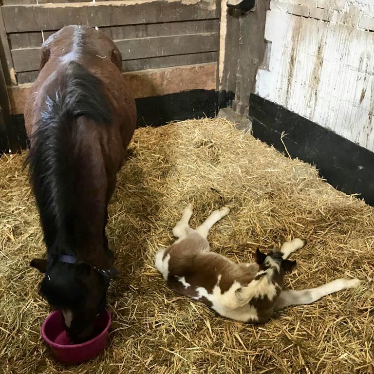 Fritzi und Frau Neumann, Pony Lister Ponyschule